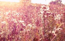 Άγρια λουλούδια στον ήλιο Στοκ Εικόνα