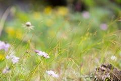 Άγρια λουλούδια στον ήλιο Στοκ Φωτογραφίες