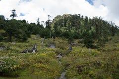 Άγρια λουλούδια στο δάσος πεύκων Στοκ Εικόνες