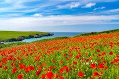 Άγρια λουλούδια στο αστείο Κορνουάλλη Porth στοκ φωτογραφία