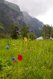 Άγρια λουλούδια χρώματος Στοκ εικόνα με δικαίωμα ελεύθερης χρήσης