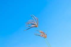 Άγρια λουλούδια χλόης στο μπλε ουρανό Στοκ Φωτογραφία