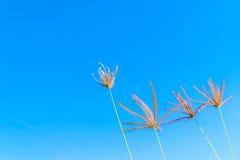 Άγρια λουλούδια χλόης στο μπλε ουρανό Στοκ φωτογραφία με δικαίωμα ελεύθερης χρήσης