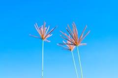 Άγρια λουλούδια χλόης στο μπλε ουρανό Στοκ Εικόνα