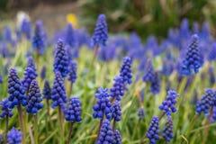 Άγρια λουλούδια bluebell Στοκ φωτογραφίες με δικαίωμα ελεύθερης χρήσης