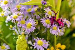 Άγρια λουλούδια Colorfull Στοκ εικόνα με δικαίωμα ελεύθερης χρήσης