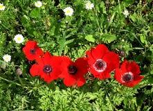 Άγρια λουλούδια 2007 Shoham Στοκ εικόνα με δικαίωμα ελεύθερης χρήσης