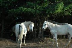 άγρια περιοχές αλόγων Στοκ εικόνα με δικαίωμα ελεύθερης χρήσης