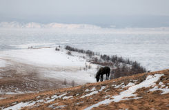 άγρια περιοχές αλόγων στοκ φωτογραφίες με δικαίωμα ελεύθερης χρήσης