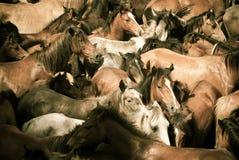 άγρια περιοχές αλόγων στοκ εικόνες με δικαίωμα ελεύθερης χρήσης