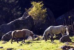 άγρια περιοχές αλόγων στοκ εικόνες