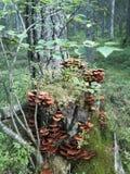 άγρια περιοχές ανάπτυξης στοκ εικόνες