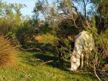 άγρια περιοχές αλόγων Φοράδα και πουλάρι στις άγρια περιοχές Στοκ φωτογραφίες με δικαίωμα ελεύθερης χρήσης