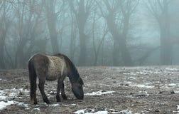 άγρια περιοχές αλόγων Στοκ Φωτογραφία