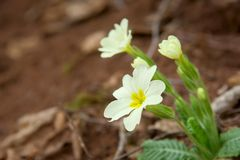άγρια περιοχές βουνών λουλουδιών Στοκ φωτογραφία με δικαίωμα ελεύθερης χρήσης