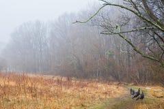 άγρια περιοχές γαλοπουλών Στοκ Εικόνες