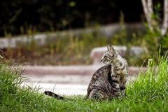 άγρια περιοχές γατών Στοκ φωτογραφία με δικαίωμα ελεύθερης χρήσης