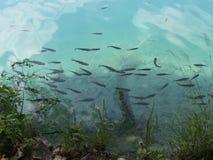 άγρια περιοχές ζωής στοκ φωτογραφία με δικαίωμα ελεύθερης χρήσης