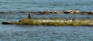 άγρια περιοχές ζωής Στοκ εικόνα με δικαίωμα ελεύθερης χρήσης