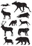 άγρια περιοχές ζώων Στοκ Εικόνες