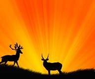 άγρια περιοχές ζώων Στοκ φωτογραφίες με δικαίωμα ελεύθερης χρήσης