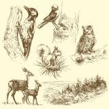 άγρια περιοχές ζώων Στοκ εικόνα με δικαίωμα ελεύθερης χρήσης