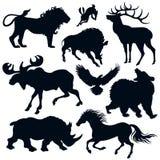 άγρια περιοχές ζώων Στοκ εικόνες με δικαίωμα ελεύθερης χρήσης