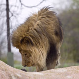 άγρια περιοχές ζώων Στοκ Φωτογραφία