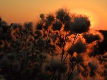 άγρια περιοχές ηλιοβασι& Στοκ Εικόνα