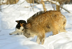 άγρια περιοχές κυνηγιού κάπρων Στοκ εικόνες με δικαίωμα ελεύθερης χρήσης