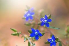 άγρια περιοχές λουλουδιών ομορφιάς με την ηλιοφάνεια για το σχέδιο Τρύγος Στοκ φωτογραφία με δικαίωμα ελεύθερης χρήσης