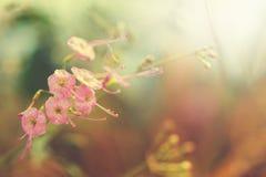 άγρια περιοχές λουλουδιών ομορφιάς με την ηλιοφάνεια για το σχέδιο Στοκ εικόνες με δικαίωμα ελεύθερης χρήσης