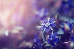 άγρια περιοχές λουλουδιών ομορφιάς με την ηλιοφάνεια για το σχέδιο Στοκ Εικόνες
