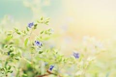 άγρια περιοχές λουλουδιών ομορφιάς με την ηλιοφάνεια για το σχέδιο Στοκ εικόνα με δικαίωμα ελεύθερης χρήσης