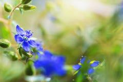 άγρια περιοχές λουλουδιών ομορφιάς με την ηλιοφάνεια Στοκ εικόνες με δικαίωμα ελεύθερης χρήσης