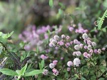 άγρια περιοχές λουλουδιών Στοκ εικόνες με δικαίωμα ελεύθερης χρήσης
