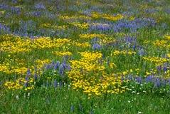 άγρια περιοχές λουλουδιών Στοκ Φωτογραφία