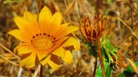άγρια περιοχές λουλου&de στοκ φωτογραφία με δικαίωμα ελεύθερης χρήσης