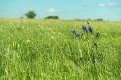 άγρια περιοχές λουλου&de Στοκ φωτογραφίες με δικαίωμα ελεύθερης χρήσης