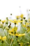 άγρια περιοχές λουλου&de Στοκ Φωτογραφία