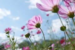 άγρια περιοχές λουλου&de Στοκ Εικόνες