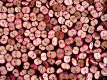 άγρια περιοχές μήλων Στοκ φωτογραφία με δικαίωμα ελεύθερης χρήσης