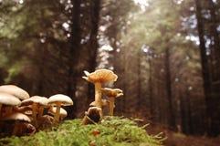 άγρια περιοχές μανιταριών Στοκ Εικόνες