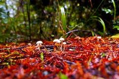 άγρια περιοχές μανιταριών Στοκ φωτογραφία με δικαίωμα ελεύθερης χρήσης