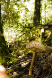 άγρια περιοχές μανιταριών Στοκ Εικόνα