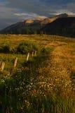 άγρια περιοχές μαργαριτών στοκ εικόνες
