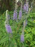 άγρια περιοχές λουλουδιών Πολύ συμπαθητικός Στοκ φωτογραφία με δικαίωμα ελεύθερης χρήσης