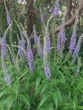 άγρια περιοχές λουλουδιών Πολύ συμπαθητικός Στοκ Εικόνες