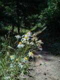 άγρια περιοχές λουλουδιών Στοκ εικόνα με δικαίωμα ελεύθερης χρήσης