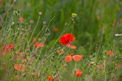 άγρια περιοχές λουλουδιών στοκ φωτογραφία με δικαίωμα ελεύθερης χρήσης